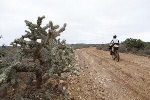 Nueva Odisea – Rosario…feeling cactus!